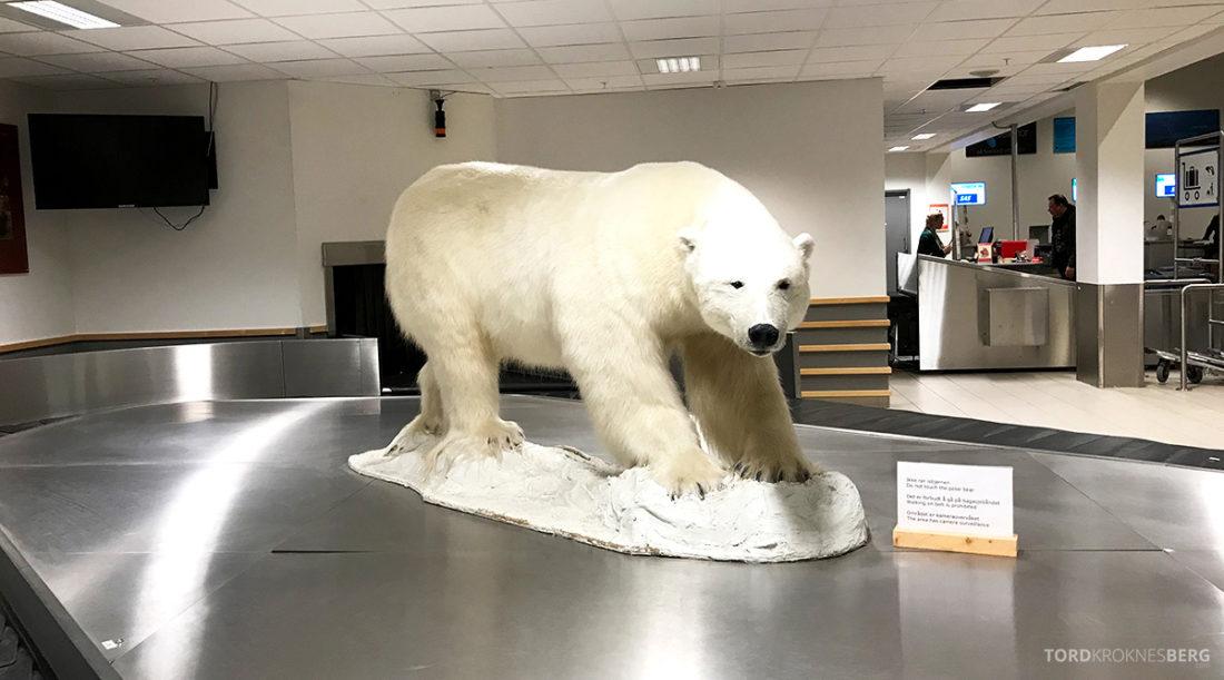 SAS Plus Oslo Svalbard isbjørn