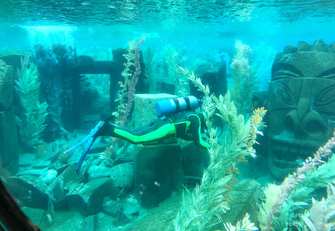 Disneyland California dykker